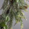 Cleophas Deluxe Green Pinecone Garland Indoor Decoration